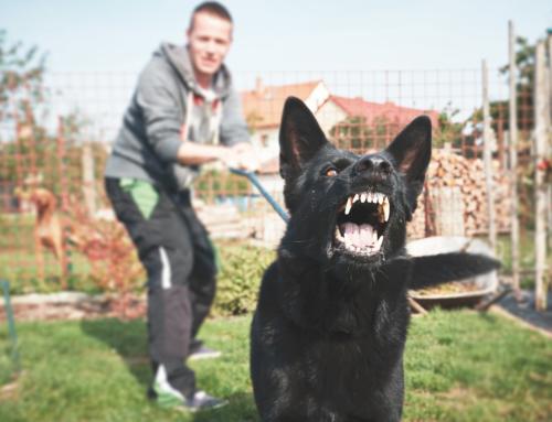 Dog Bite Personal Injury Claims